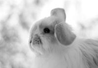 BW Rabbit