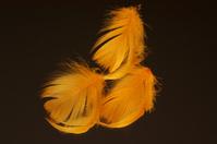 Orange feathers on black background
