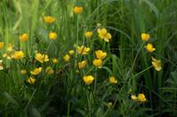 Swamp floral mix