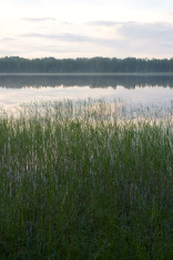 lake view in summer