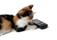 Kitten waiting for a call