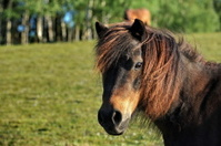 Horse in the morning sun 2