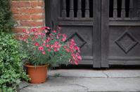 Flowerpot by rustic door