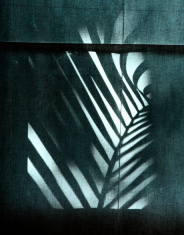 Palm Frond Silhouette