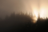 Thick Fog at Sunrise