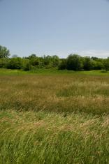 Field in Iowa
