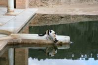 Poolkeeper of Alhambra
