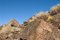 Desert Rock and Lichen