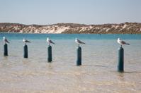 Five seagulls sitting on poles
