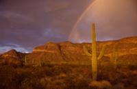 Organ Pipe Cactus Rainbow