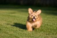 Playful Puppy Running