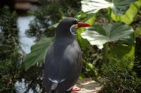 Red beak Exotic Bird