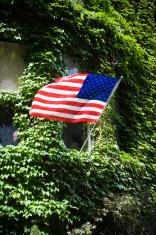 American Flag & Ivy