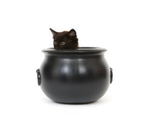 Kitten in a cauldron