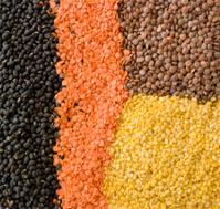 Indian Food - Lentils