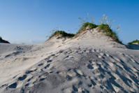 Outer Banks Sand Dune