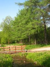 LIttle bridge in the wood.