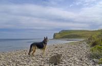 Dog on seacoast