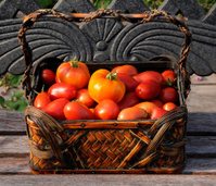 Autumn Tomatoes Harvest Basket