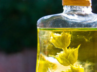 Herbs in the oil