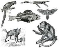 Wildlife vintage collection