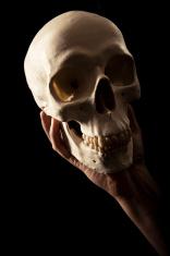 Hand holding Skull
