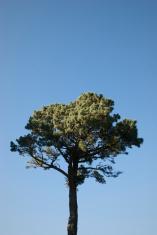 Lone Evergreen Top
