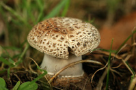 Autumn scene: little mushroom in the grass