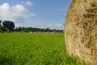 Bales of hay - series