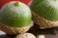 Macro of Little Green Acorns