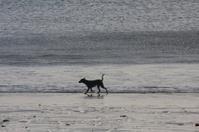silhouette of running dog