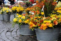 flower market series