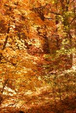 Autumn Fury I