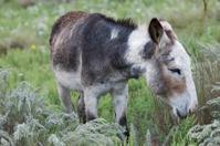 Im Your Donkey