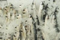 Mackerels and sea breams