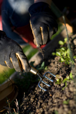 Weeding the Veg Patch
