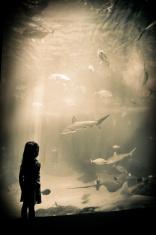 Vintage Maui - Aquarium