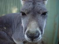 Roo Closeup
