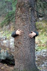 Tree Hugger... Close-up