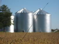 Grain bins with focus on stem of grass