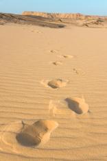 Tread in the desert of Baharya