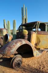 Car wreck with Cactus