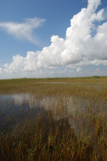 Everglades on a sunny blue sky day.