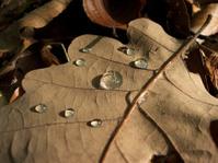 Rain drops at leaf
