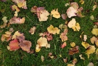fall with coloured leaves