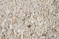 marco island sea shells