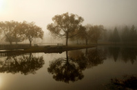 foggy day in the park