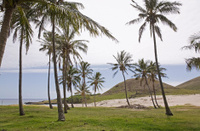 Palm trees at Anakena Beach