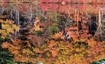 Reflected Fall Foliage