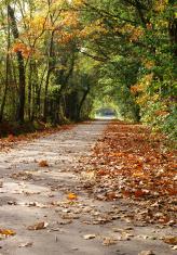 Autumn avenue.